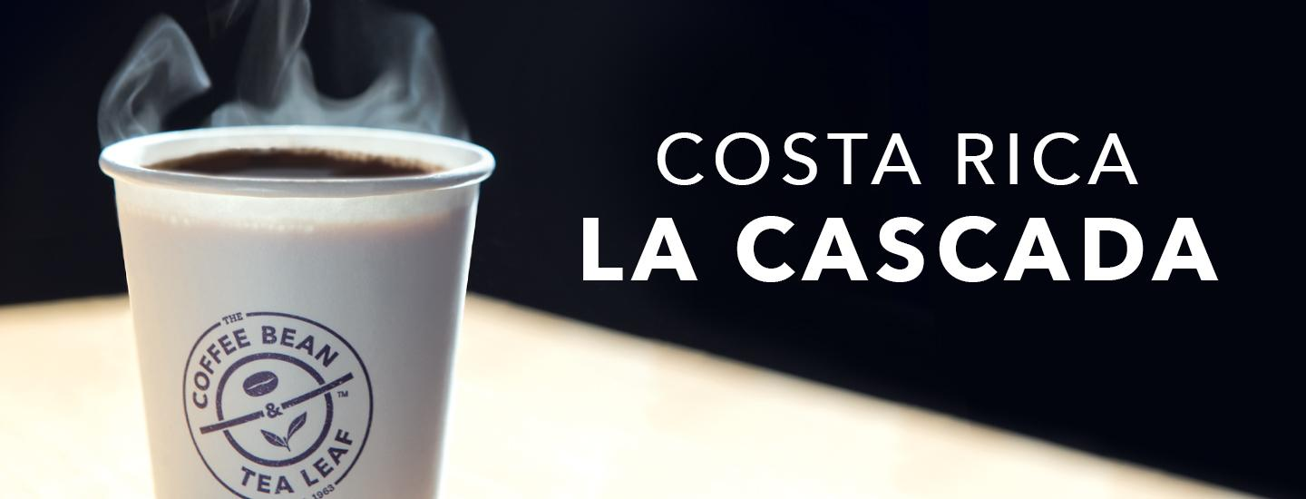 cup of Costa Rica La Cascada brewed coffee