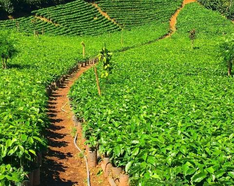 Why Ethically Sourced Tea Matters