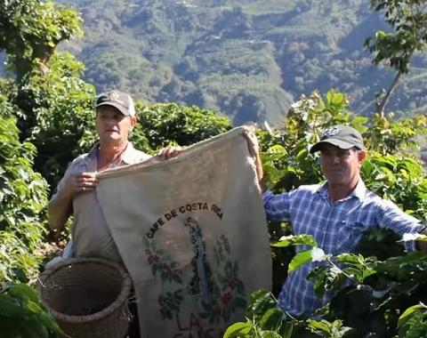 coffee farmers in Costa Rica